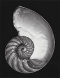 Photographs, Edward Weston (American, 1886-1958). Shell, 1927. Gelatin silver, printed later by Cole Weston. 9-1/4 x 7-1/4 inches (23...