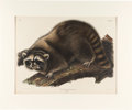 Books:Natural History Books & Prints, John James Audubon. Procyon Lotor, Cuvier.