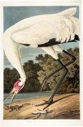 Books:Natural History Books & Prints, John James Audubon. Group of Over 240 Prints from the Abbeville Press Publication of The Birds of America. [New York...
