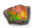 Fossils:Cepholopoda, Ammolite Fossil. Placenticeras sp.. Cretaceous. BearpawFormation. Southern Alberta, Canada. 2.40 x 1.64 x 0.67 inches(6....