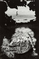 Jerry Uelsmann (American, b. 1934) Untitled (Figure and caked ground), 1968 Gelatin silver 13-1/2 x 9 inches (34.3 x...