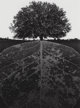Jerry Uelsmann (American, b. 1934) Untitled, 1964 Gelatin silver 13-1/4 x 9-5/8 inches (33.7 x 24.4 cm) Initialed an