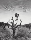 Photographs:Gelatin Silver, Jerry Uelsmann (American, b. 1934). Homage to Wine, 1994. Gelatin silver. 5-7/8 x 4-1/2 inches (14.9 x 11.4 cm). Signed,...