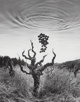 Jerry Uelsmann (American, b. 1934) Homage to Wine, 1994 Gelatin silver 5-7/8 x 4-1/2 inches (14.9 x 11.4 cm) Signed