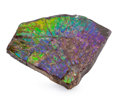 Fossils:Cepholopoda, Ammolite Fossil. Placenticeras sp.. Cretaceous. BearpawFormation. Southern Alberta, Canada. 4.01 x 3.72 x 0.57 inches(10...