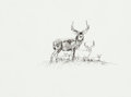 Fine Art - Painting, American, Robert E. Lougheed (American, 1910-1982). Deer. Ink on board. 6 x 8 inches (15.2 x 20.3 cm). Initialed lower right: RE...