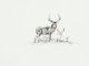 Robert E. Lougheed (American, 1910-1982) Deer Ink on board 6 x 8 inches (15.2 x 20.3 cm) Initialed lower right: RE... (1...