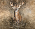 Fine Art - Work on Paper:Watercolor, Ragan Gennusa (American, 1944). Deer. Watercolor on paper.23 x 27-1/2 inches (58.4 x 69.9 cm) (sight). Signed lower rig...
