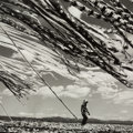 Photographs, Werner Bischof (Swiss, 1916-1954). Silk Drying in the Wind, Kyoto, 1951. Gelatin silver, printed later. 14-1/2 x 14-1/2 ...