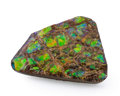 Fossils:Cepholopoda, Ammolite Fossil. Placenticeras sp.. Cretaceous. Bearpaw Formation. Southern Alberta, Canada. 2.42 x 1.74 x 0.39 inches (6....