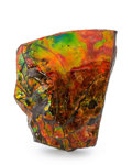 Fossils:Cepholopoda, Ammolite Fossil. Placenticeras sp.. Cretaceous. BearpawFormation. Southern Alberta, Canada. 4.27 x 3.31 x 1.50 inches(10...