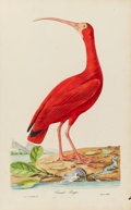 Books:Natural History Books & Prints, J[ean] T[héodore] Descourtilz. [Oiseaux brillans du Brésil. Paris: 1834]. First edition of the rarest bird book rela...