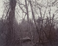 Photographs, Linda Connor (American, b. 1944). Lightening (Nevada) and Woods (Belmont, Massachusetts) (two photographs), 1976... (Total: 2 Items)