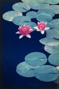 Photographs:Chromogenic, Allan Bruce Zee (American, 20th Century). Lily Pads, BalboaPark, San Diego, California (two photographs), 1984.Dye... (Total: 2 Items)