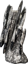 Sculpture, A Fossilized Orthoceras Sculpture. Orthoceras sp.. Devonian. Sahara Desert, Morocco. 18 x 9 x 6 inches (45.7 x 22.9 x 15...