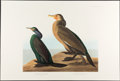 Books:Natural History Books & Prints, John James Audubon. Group of Over Ninety Prints from the Abbeville Press The Birds of America. [New York: 1985]....