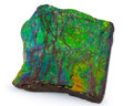 Fossils:Cepholopoda, Ammolite Fossil. Placenticeras sp.. Cretaceous. BearpawFormation. Alberta, Canada. 2.51 x 2.43 x 0.32 inches (6.38 x6.18...