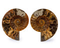 Fossils:Cepholopoda, Sliced Ammonite Pair. Cleoniceras sp.. Cretaceous. Madagascar.5.08 x 4.30 x 0.53 inches (12.90 x 10.91 x 1.35 cm). ...(Total: 2 Items)