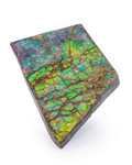 Fossils:Cepholopoda, Ammolite Fossil. Placenticeras sp.. Cretaceous. BearpawFormation. Alberta, Canada. 2.70 x 1.86 x 0.33 inches (6.85 x4.73...
