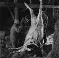 Photographs:Gelatin Silver, Peter Hujar (American, 1934-1987). Untitled (Slaughtered Cow), 1981. Gelatin silver. 14-3/4 x 14-3/4 inches (37.5 x 37.5...