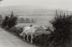 Henri Cartier-Bresson (French, 1908-2004) Ireland (White Horse), 1952 Gelatin silver 8 x 12 inches (20.3 x 30.5 cm)