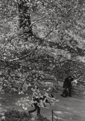 Photographs, André Kertész (Hungarian, 1894-1985). Tree and Dog Walk, 1967. Gelatin silver. 8-1/4 x 6 inches (21.0 x 15.2 cm). Dated ...