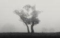 Photographs, Michael Kenna (British/American, b. 1953-). Two Trees, Richmond Park, Surrey England, 1979. Gelatin silver, 1980. 5-3/4 ...