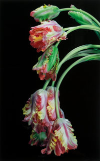 Jonathan M. Singer (American, 1949) Tulips, from the series Botanica Magnifica , 2008 Oversized digi