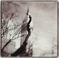 Photographs, Keith Carter (American, b. 1948). Squirrel Tree, New York, 1998. Gelatin silver. 14-5/8 x 14-5/8 inches (37.1 x 37.1 cm)...