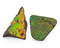 Fossils:Cepholopoda, Ammolite Fossils. Placenticeras sp.. Cretaceous. BearpawFormation. Alberta, Canada. 2.28 x 2.31 x 0.30 inches (5.79 x5.8... (Total: 2 Items)