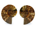 Fossils:Cepholopoda, Sliced Ammonite Pair. Cleoniceras sp.. Cretaceous.Madagascar. 3.49 x 2.73 x 0.44 inches (8.87 x 6.93 x 1.12c... (Total: 2 Items)