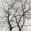 Photographs, George A. Tice (American, b. 1938). Trees Portfolio (twelve photographs), 1964-65. Gelatin silver. Sizes vary from 4... (Total: 12 )