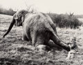 Photographs, John Drysdale (American, 20th Century-). Trying the Patience of a Saint, 1970; Infant versus Elephant, 1974; Never... (Total: 3 Items)