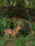 Paintings, Raymond Booth (British, 1929-). Young Roe deer in Adel Woods, 1999. Oil on Masonite. 32 x 42 inches (81.3 x 106.7 cm). S...