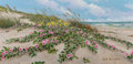 Fine Art - Painting, American, William A. Slaughter (American, 1923-2003). South Padre. Oilon canvas. 12 x 24 inches (30.5 x 61.0 cm). Signed lower ri...