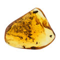 Amber, Amber with Inclusions. Eocene. Baltic Region. Russia. ...