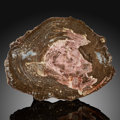 Fossils:Paleobotany (Plants), Petrified Conifer Slab. Araucarioxylon. Triassic. Chinle Formation. Arizona, USA. ...