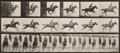 Photographs, Eadweard Muybridge (British, 1830-1904). Animal Locomotion, Plate 633, 1887. Collotype, printed later. 7-3/8 x 16-1/2 in...