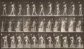 Photography:Other, Eadweard Muybridge (British, 1830-1904). Animal Locomotion, Plate 541, 1887. Collotype, printed later. 8-1/4 x 14-1/4 in...