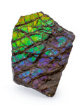 Fossils:Cepholopoda, Ammolite Fossil. Placenticeras sp.. Cretaceous. Bearpaw Formation. Southern Alberta, Canada. 2.01 x 1.39 x 0.22 inches (5....