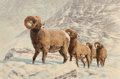 Fine Art - Painting, American, Tom Beecham (American, 1926-2000). Big Horn Sheep. Oil oncanvas. 24 x 36 inches (61.0 x 91.4 cm). Signed lower right: ...