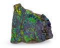 Fossils:Cepholopoda, Ammolite Fossil. Placenticeras sp.. Cretaceous. BearpawFormation. Southern Alberta, Canada. 4.48 x 3.83 x 0.50 inches(11...