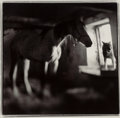 Photographs, Keith Carter (American, b. 1948). Horses and Wolf, 1998. Gelatin silver. 15-1/4 x 15-3/8 inches (38.7 x 39.1 cm). Signed...