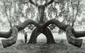 Photographs, Jerry Uelsmann (American, b. 1934). Untitled (Man and tree). Gelatin silver, printed later. 6 x 9-1/2 inches (15.2 x 24....