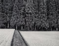 Photographs:Gelatin Silver, John Sexton (American, b. 1953). Rice Field and Pine Forest, Japan, 1985. Gelatin silver, 1988. 10-1/8 x 12-7/8 inches (...