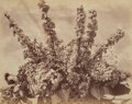 Photographs:Albumen, American Artist (20th Century). Untitled (Flowers). Albumen print. 11-1/4 x 14 inches (28.6 x 35.6 cm). Signed indistinc...