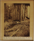 """Photography:Signed, Albumen Print of Giant Redwood, """"The Big Tree on Dolbeer & Carson's Claim, Elk River, Humboldt Co., California---18 FEET IN ..."""
