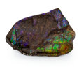 Fossils:Cepholopoda, Ammolite Fossil. Placenticeras sp.. Cretaceous. BearpawFormation. Alberta, Canada. 1.67 x 1.21 x 0.26 inches (4.24 x3.08...