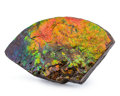 Fossils:Cepholopoda, Ammolite Fossil. Placenticeras sp.. Cretaceous. BearpawFormation. Alberta, Canada. 8.07 x 4.72 x 1.18 inches (20.50 x12....
