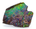 Fossils:Cepholopoda, Ammolite Fossil. Placenticeras sp.. Cretaceous. Bearpaw Formation. Alberta, Canada. 3.82 x 3.75 x 0.73 inches (9.71 x 9.52...
